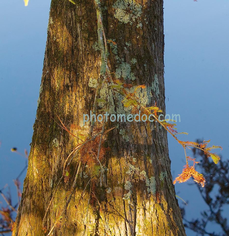 Hanging Tree Limb